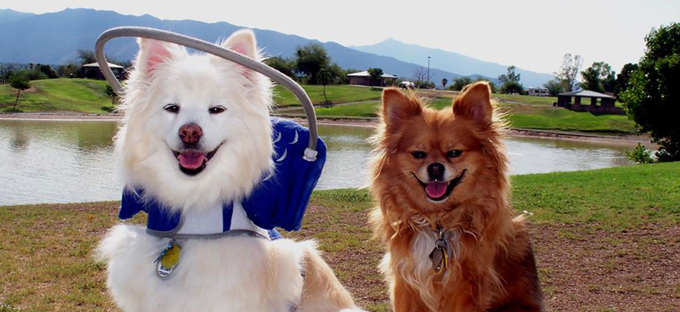 blind-dogs–1