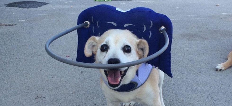 blind-dogs-non-profit